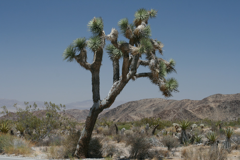 Joshua Tree Park, California USA
