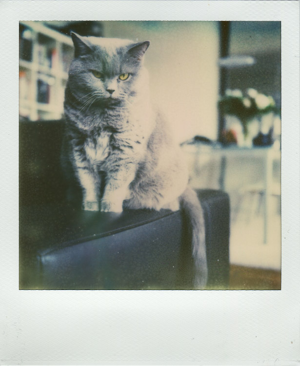 Polaroid Sheena